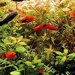 熱帯魚:選び方、水槽の立ち上げ、メンテナンス、病気のことがすぐわかる! (アクアリウム☆飼い方上手になれる!)