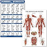 """QuickFit Dumbell Workouts and Muscular System Anatomy Poster Set - Laminated 2 Chart Set - Dumbbell Exercise Routine & Muscle Anatomy Diagram - 18"""" x 27"""""""
