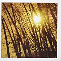 フローレンNature–Thru The Bamboo–グリーティングカード Set of 12 Greeting Cards