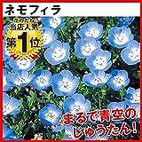国華園 種 花たね ネモフィラ 1袋(200mg) 第4種郵便 /21年秋商品