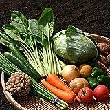 野菜セット おまかせ 有名な産地の野菜をたっぷり フレッシュ 野菜詰め合わせ 8種類以上