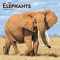 Elephants 2020 Calendar