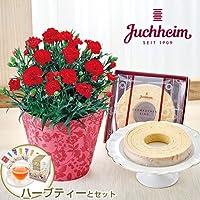 母の日 ユーハイム「バウムクーヘン」とカーネーション鉢のセット ハーブティー付き 日比谷花壇