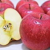 りんご 5kg 長野県 平均糖度13度前後 長野県産 シナノドルチェ 西村青果