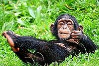 野生のチンパンジー 自然動物の写真 アートキャンバス印刷ポスター(40x60cm)