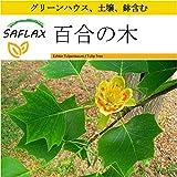 SAFLAX - 鉢植えセット - 百合の木 - 20 個の種。- ミニプラスチックグリーンハウス、鉢植え用土壌、鉢×2個を含みます - Liriodendron tulipifera