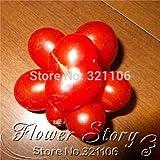 スワンズグリーン非常にまれな家宝!100トラベラーのトマト種子!ブドウのように離れて&食べる!野菜の種子。