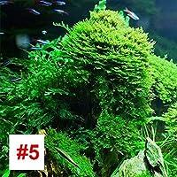 Rosepoem 水生植物の種子、1000個/パッケージ魚飼育用の水槽の水草の種子のカーペットの植物種子の装飾植物 - #5