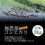 【お土産】無農薬米コシヒカリ 白米(精米) 2kg/アイガモ農法で育てた安心・安全の新潟米