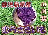 鹿児島県産 むらさきいも 紫芋 「山川紫」 1箱:約2kg サイズ:M~2L混合 新芋(2016年産)