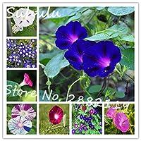 混合:100種子/袋美しいグレートモーニンググローリーフラワーシードグレートペチュニア種子Diyホームガーデン植栽簡単に育てる
