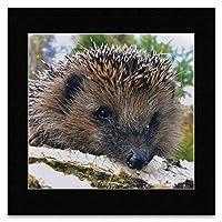 Garden Friends - Hedgehog Mini Poster - 40x40cm