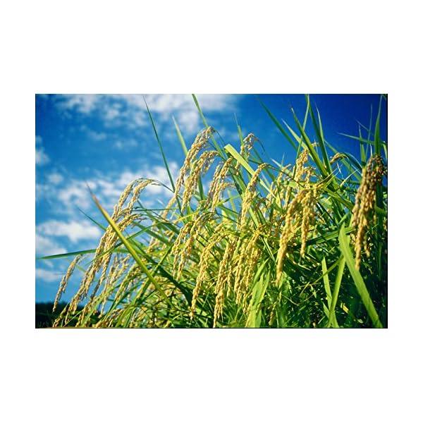 【精米】新潟県 北越後産 特別栽培米 白米 こ...の紹介画像4