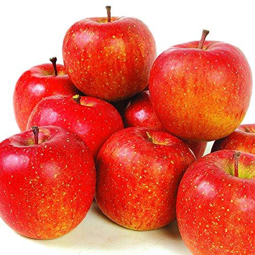 国華園 青森産 ご家庭用 蔵出しふじ 10kg1箱 りんご ご家庭用
