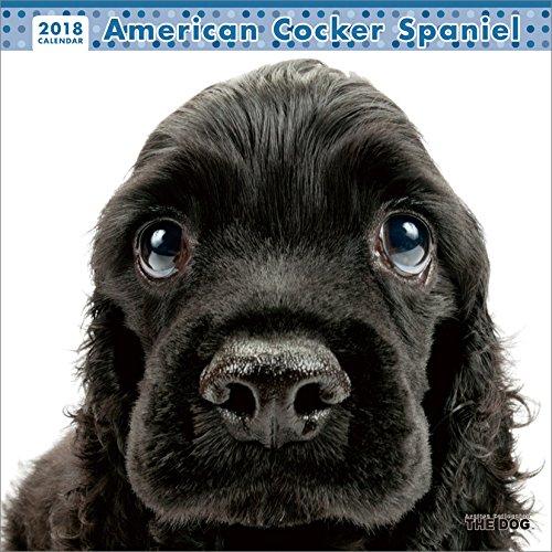 THE DOG 2018年 カレンダー アメリカンコッカー スパニエル
