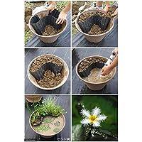 charm(チャーム) (ビオトープ/水辺植物)ビオトープレイアウトセット ガガブタ+水辺植物3種 あぜなみ付 【生体】
