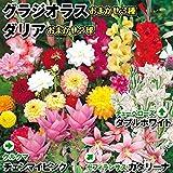 国華園 春植え球根ガーデンセット 7種50球【※発送が国華園からの場合のみ正規品です】
