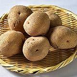 越冬 ジャガイモ 男爵 5kg ニセコ産 LMサイズ