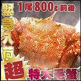 毛ガニ 1尾800g 超特大 BIGサイズ 最高ランク堅蟹