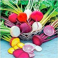 600種のパッケージ、レインボーミックスビーツ(ベータ版尋常)非GMO種子