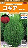 サカタのタネ 実咲花7180 コキア (ほうき草)グリーン 00907180
