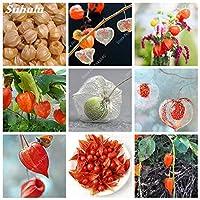 500個/袋甘いおいしいPhysalisジューシーフルーツゴールデンベリー盆栽ChineseSeed Laternガーデン植物Gooseberry Semiilas de Flore:100個Gooseberry