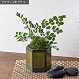 プリザーブド 観葉植物 盆栽 「和風アジアンタム」 日比谷花壇