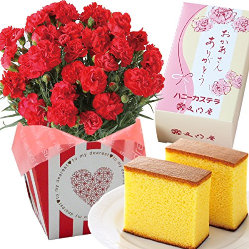 image of 赤カーネーション5号鉢 文明堂カステラ 花とスイーツ 花鉢 母の日ギフト