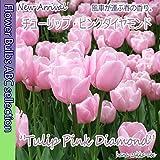 ◆【オランダからの花便り】人気No.1「チューリップ・ピンクダイヤモンド」10球【球根】