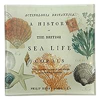 Sea Life Natural History正方形ガラスTransferwareプレート