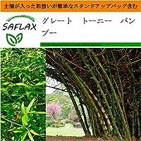 SAFLAX - Garden in the Bag - グレート トーニー バンブー - 50 個の種。- 取扱いが簡単なスタンドアップバッグに栽培用土壌が入っています - Dendrocalamus arundinacea