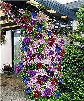 100個の種子、電子種子種子の盆栽ポット庭の装飾鉢植えのだから、美容