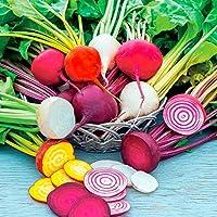 種子:野菜ビーツレインボーカラフルなミックス250個の最高級の英国の新鮮な種子レア
