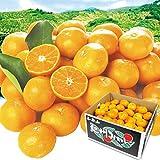 国華園 和歌山産 紀州のうまいみかん 10kg1箱 蜜柑 みかん