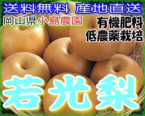 低農薬 岡山産 若光 梨 約5キロ 3L サイズ 大玉14玉入 贈答用 産地直送