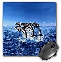 3drose LLC 8x 8x 0.25インチマウスパッド、Dolphins ( MP _ 308_ 1)