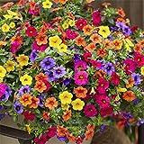 LEDGOO 【送料無料】花の種 ペチュニア パステルカラー ミックス 約100粒 (C03)