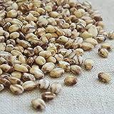 もち麦 国産 1kg ( 500g x 2袋 )