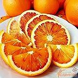 愛媛 県産 ブラッド オレンジ 5 kg サイズ込み 【 国内産 希少 品種 】