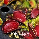ベストセラー!100個/ロットレッドドラゴンハエトリソウは盆栽鉢植えハエジゴクMuscipula植物種子テラスガーデン食虫植物、#のK8をシード