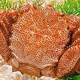 築地の王様 かに 毛ガニ 北海道産 浜茹で毛蟹姿 平均570g前後×2尾 ボイル 正規品 冷凍