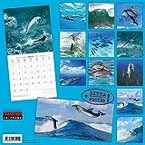 Delfine - Dolphins - Dauphins 2018 Artwork