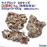 (海水魚)ライブロック SSサイズ お買得(1kg)(形状お任せ) 本州・四国限定[生体]