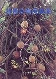 熱帯の有用果実