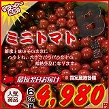 訳あり規格外品!! ミニトマト 6kg箱