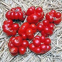 【SEED】Heirloom Tomato® Voyage エアルーム・トマト・ヴォヤージュ(15seeds)R*2015新品種