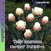 ◇【オランダからの花便り】春を彩る「チューリップ・アイスクリーム」2球【球根】