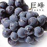 【 九州産 】 種無し 巨峰 (きょほう) 秀品 約300g×4パック入り 大粒から溢れる果汁がたまりません。 (種無し)