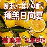 宮崎県 プリンセス 種無日向夏(たねなしひゅうがなつ) 赤秀13~ 14玉 化粧箱入り