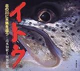 イトウ―北の川に大魚を追う